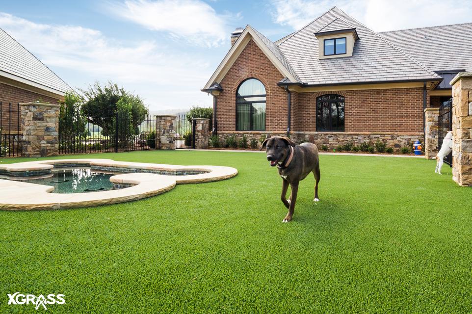 XGrass pet-friendly artificial grass installed in the backyard
