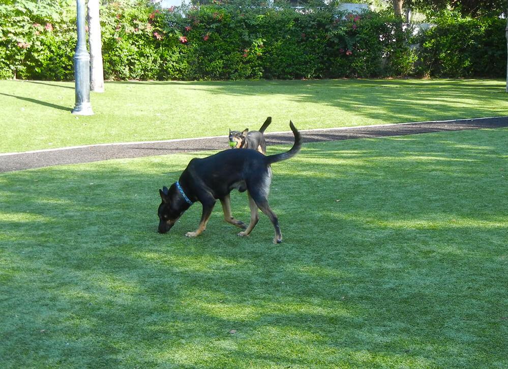 XGrass Pet Park Turf
